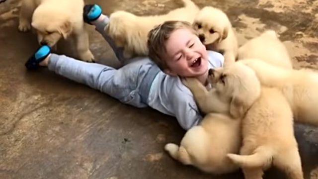 littleboynpuppy0