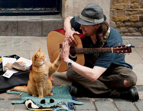 ハイタッチをするジム猫に、ハイタッチ猫が続く!!