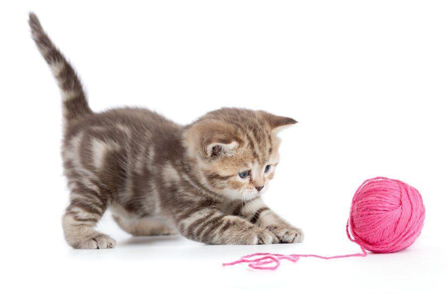ピンクの毛糸玉で遊ぶ子猫