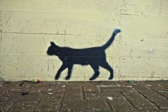 cat-3049098_640_e