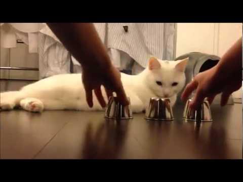 賢こ過ぎるネコ!!【ねこ動画】