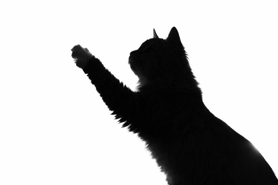 手を伸ばす猫のシルエット