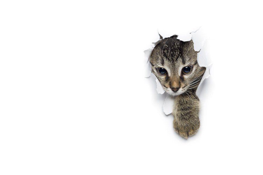壁を破って顔を出す猫