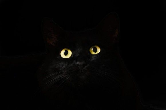 cat-eyes-2944820_640_e