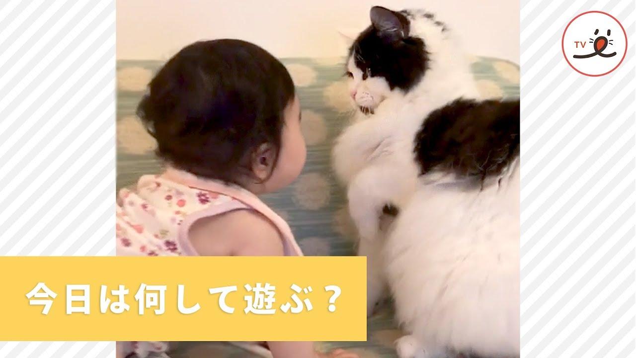 インスタで話題 赤ちゃんとニャンコ、いっつもいっしょ【動画】