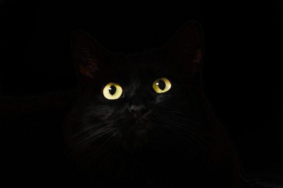 鳴き声だけ姿は見えず。全米で大騒動を引き起こしたミステリー「囚われの猫」。