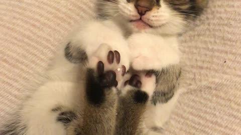 子猫、遊びながら寝ちゃった【動画】イスタンブール