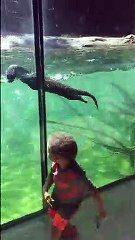 大きな水槽で泳ぎまわるカワウソの姿に感動した子ども【動画】