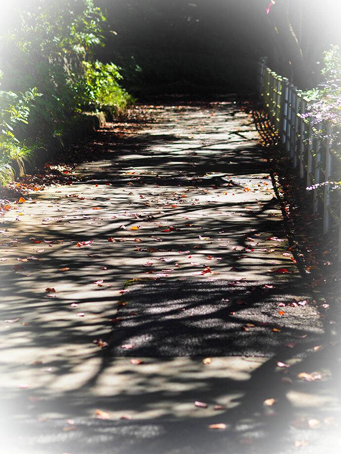 色づき始めた都会の紅葉