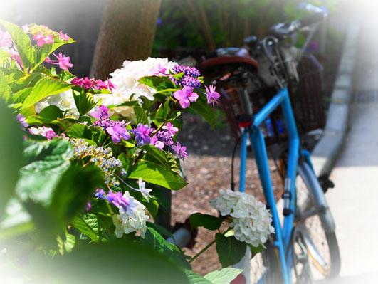 自転車とカメラ、趣味への拘り