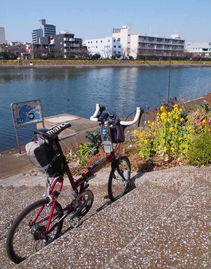 自転車で野鳥観察♪