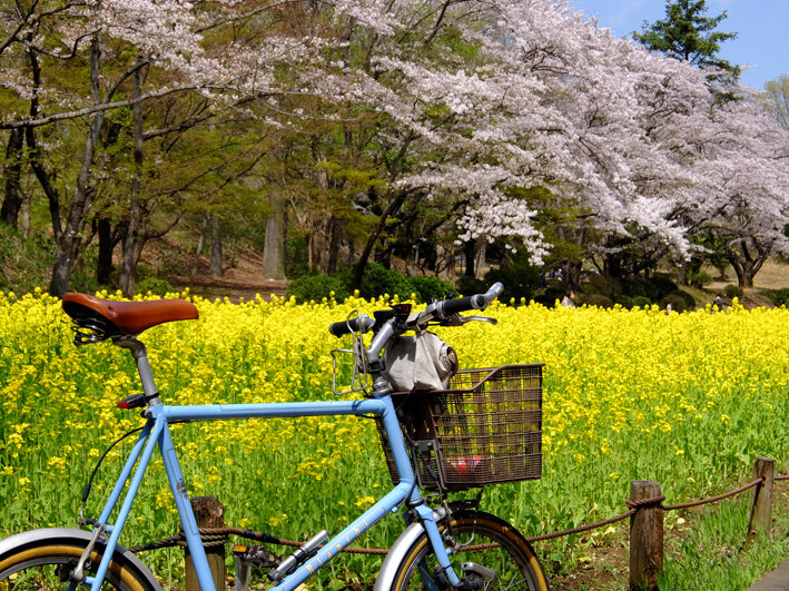 さらば愛しき自転車たち