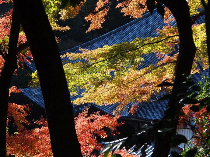 三浦半島・鷹取山ハイキング