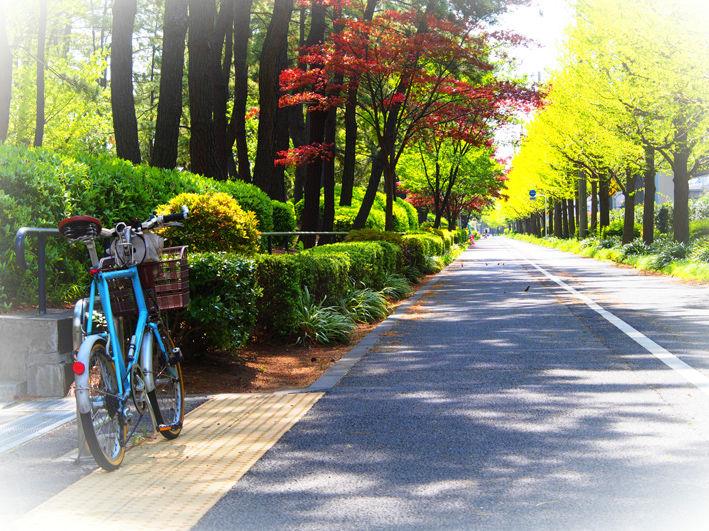 花の街角  サイクリング♪