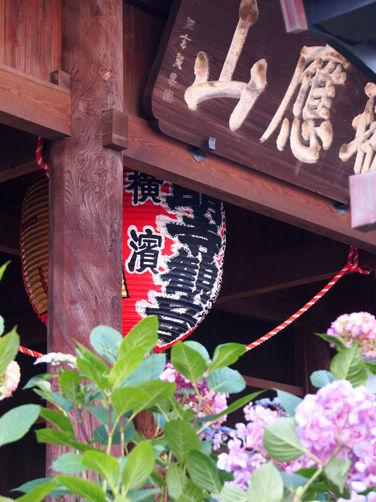 横濱弘明寺の紫陽花とサンパチ縁日♪