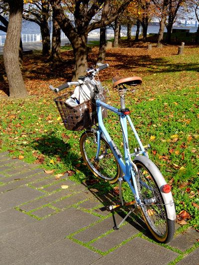 自転車で根岸森林公園へ 温かな冬景色