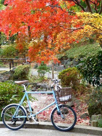 本日の横浜営業サイクリング/街の色付きも綺麗です♪