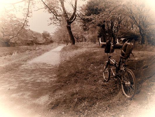 花のサイクリングロード、春の野川♪