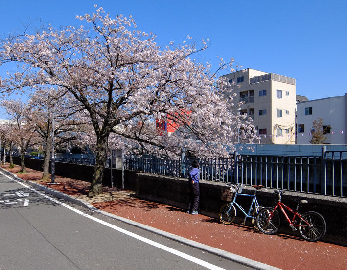 次の土曜日は関戸橋フリーマーケット♪