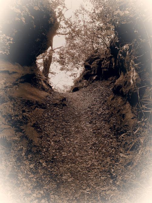 氷取沢から北鎌倉ハイキング前編 大岡川の源流へ♪