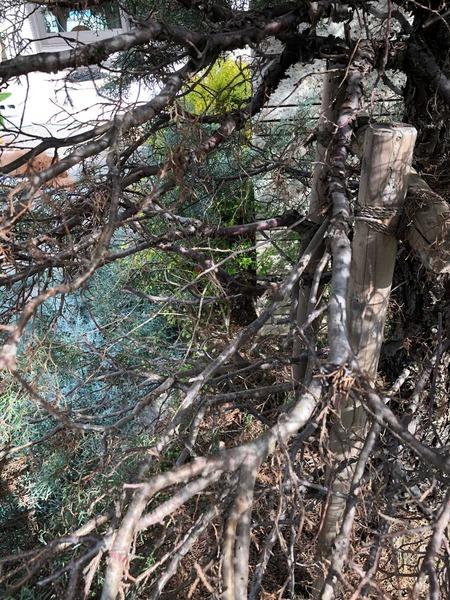 beforeinsidetree