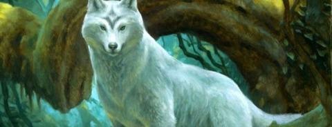 wolf-730x280