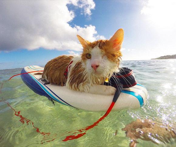 波乗り猫1