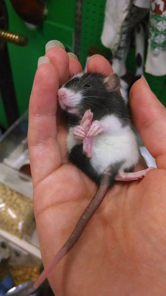 可愛らしい動物の画像15