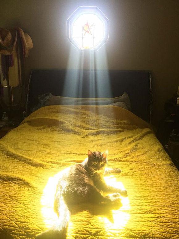 温まることが大好きネコちゃん3