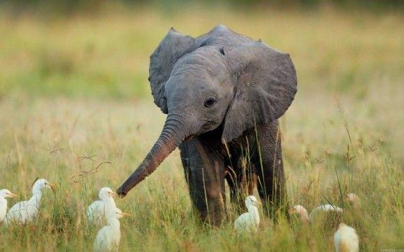野生の動物のいい写真31