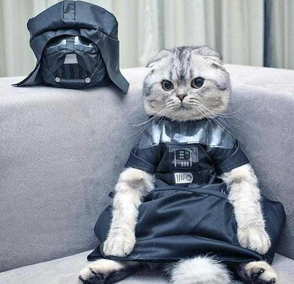 7コスチュームをした猫