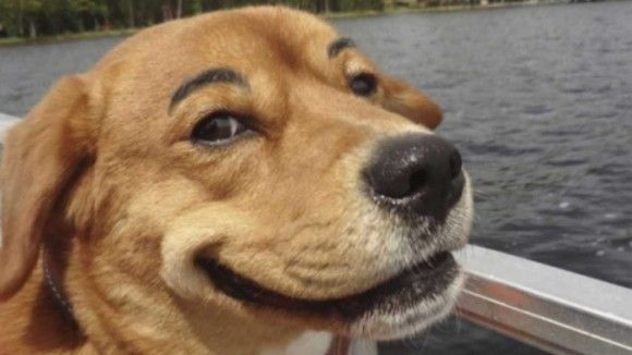 犬猫の面白画像1