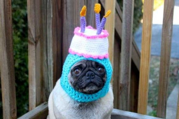 誕生日を祝ってくれるペット画像4