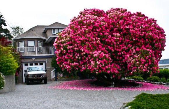 地球上でもっとも凄い木1