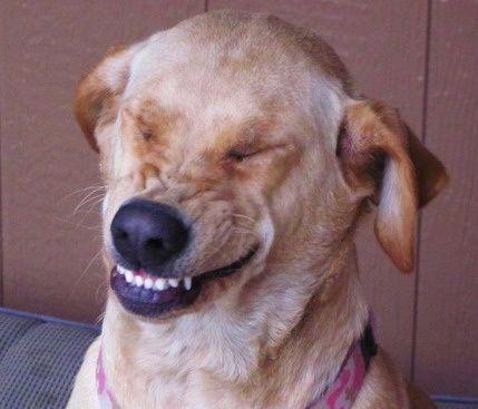 動物達の最高の笑顔8