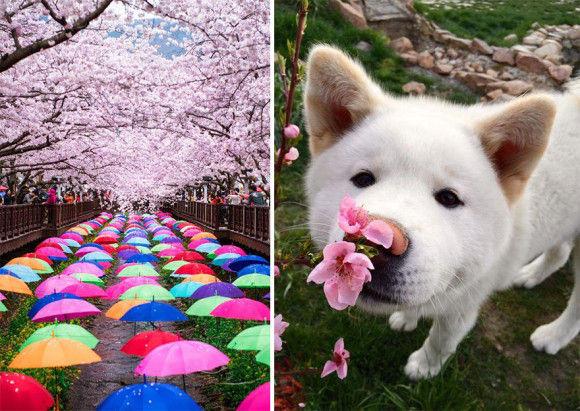 日本の桜9