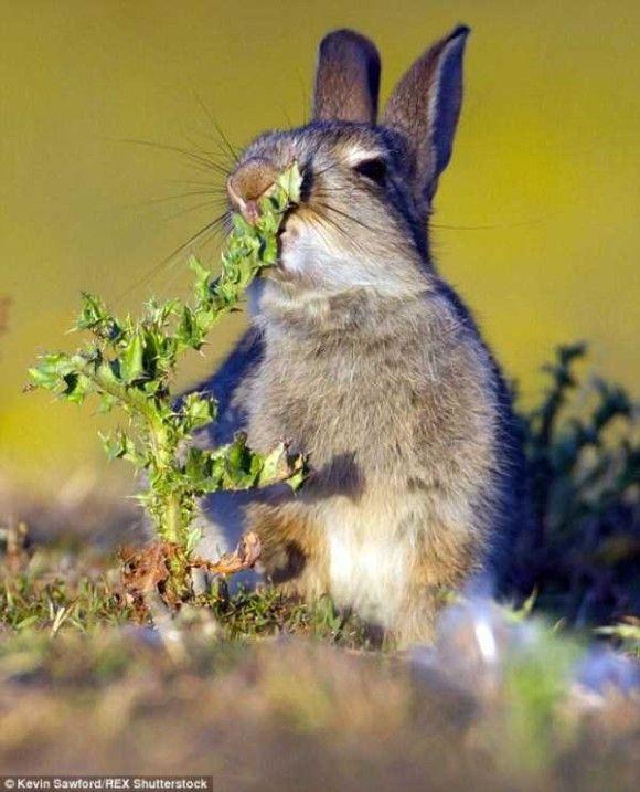 悶絶するウサギ1