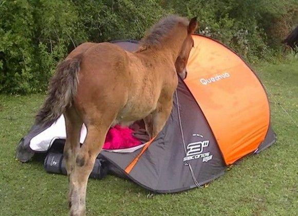 キャンプで楽しむ術13