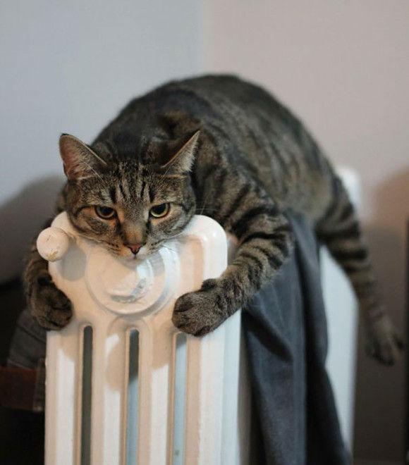 温まることが大好きネコちゃん6