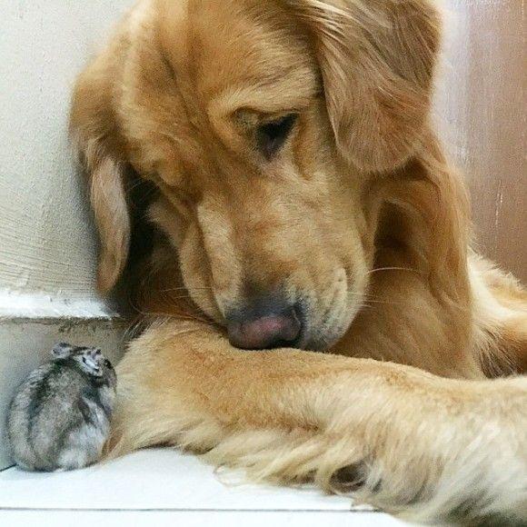 鳥と犬が友達になった結果9