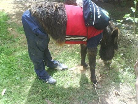 動物が服を着た2