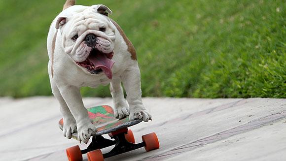 スケボーでギネスに載った犬2