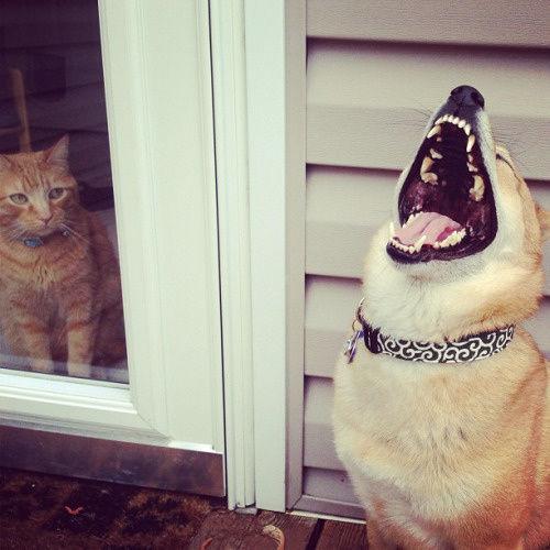動物達の最高の笑顔3