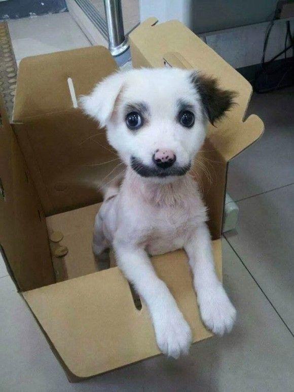 犬猫の面白画像4