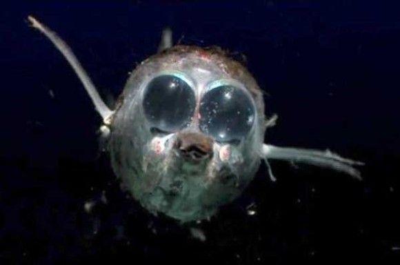 深海生物21