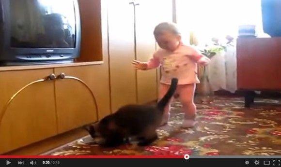 赤ちゃんから子猫を取り返そうとする親猫4