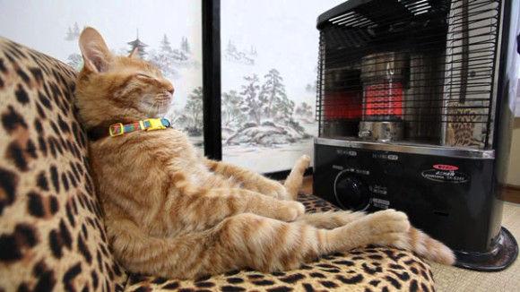温まることが大好きネコちゃん12
