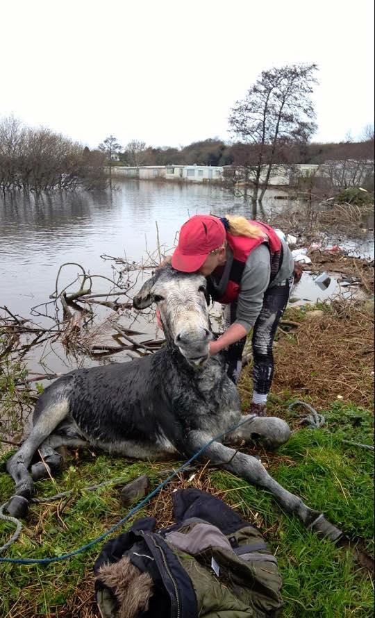 洪水から救出されたロバ6