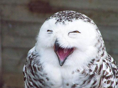 動物達の最高の笑顔4