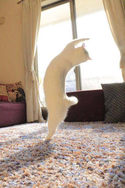 バレエを踊る猫2